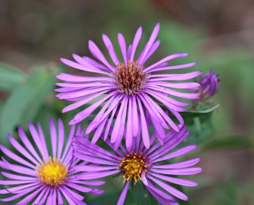 native plant